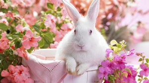 happy-easter-to-all-my-dn-buddies-animal-bunny-ears-easter-eyes-flower-pot-flowers